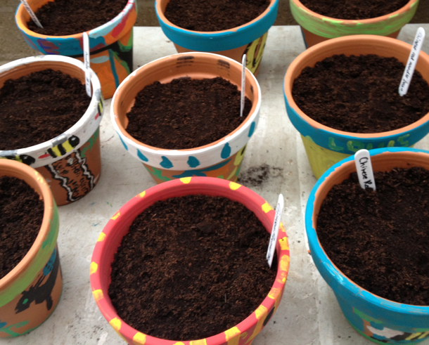 pots-with-compost