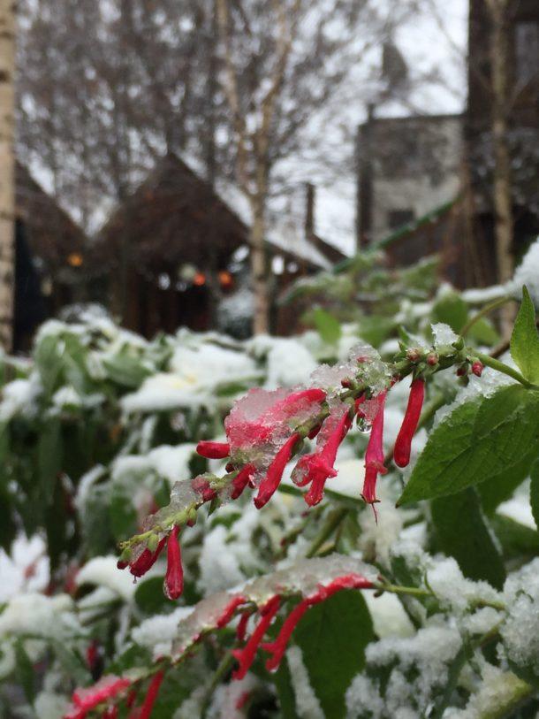 winterclose2